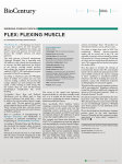 FLEX: Flexing Muscle - Lightstone Ventures