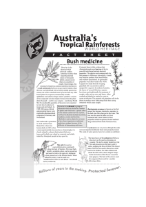 bush medicine plants factsheet