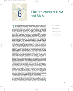 The Structures of DNA and RNA