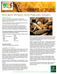 Grains of truth- Ancient and Pseudo grains r2