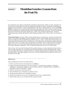 Mendelian Genetics: Lessons from the Fruit Fly