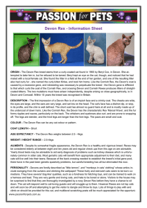 Devon Rex - Information Sheet