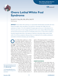 Overo Lethal White Foal Syndrome