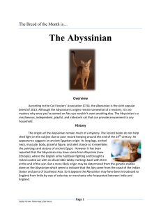 The Abyssinian - Cedar Grove Veterinary Services