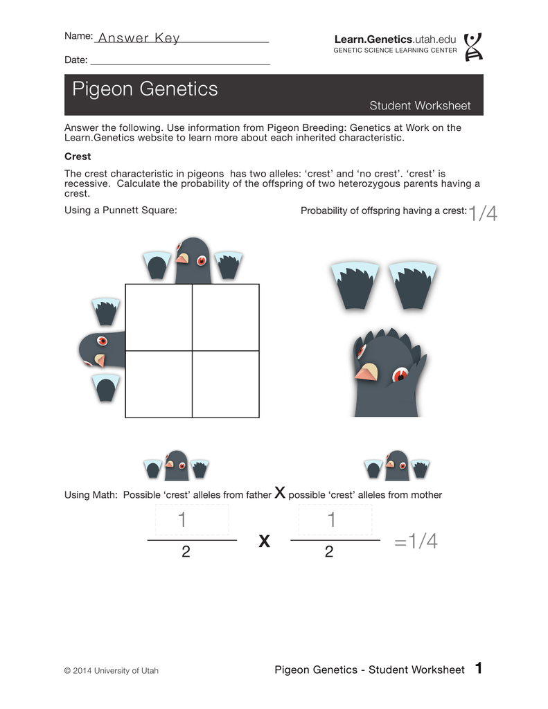 Genetics Worksheet Answer Key - Nidecmege