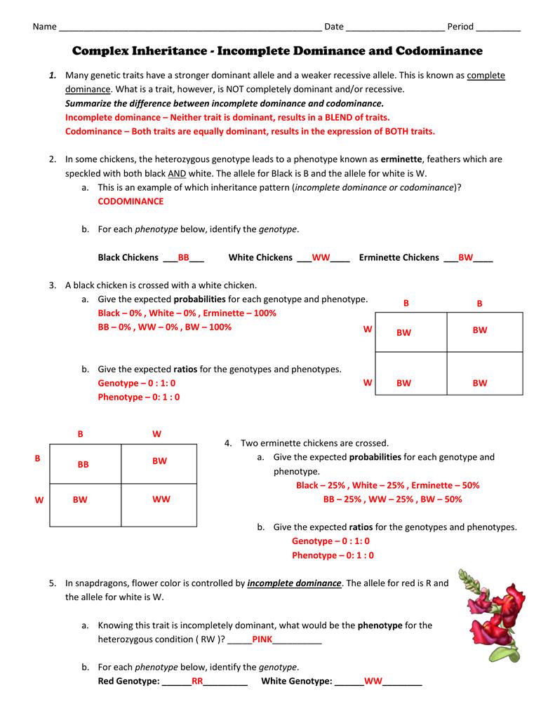 Incomplete And Codominance Worksheet Doc - worksheet