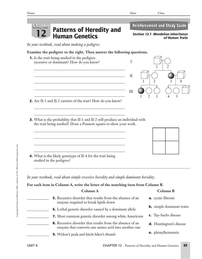 Chapter 12 Patterns Of Heredity And Human Genetics ...