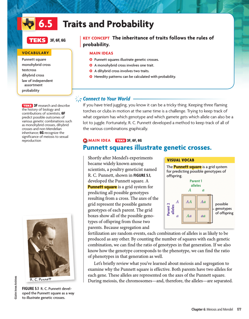 Chapter 6 dihybrid cross worksheet answer key