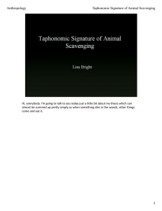 1 Anthropology Taphonomic Signature of Animal Scavenging