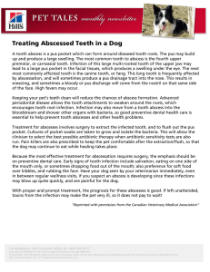 Treating Abscessed Teeth in a Dog