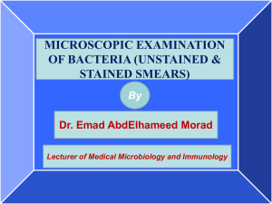 MICROSCOPIC EXAMINATION OF BACTERIA (UNSTAINED & STAINED SMEARS) By