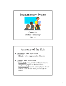 Integumentary System Anatomy of the Skin