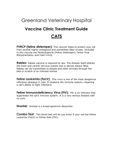 All Pets Veterinary Hospital - Greenland Veterinary Hospital