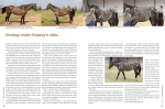 Getting under Guinny`s skin... - Backstretch Equine and Canine