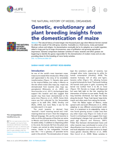 Genetic, evolutionary and plant breeding insights from the