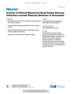 Activity of Defined Mushroom Body Output Neurons