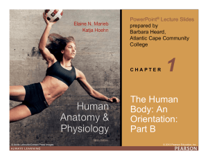 An Orientation to the Human Body (Part B)