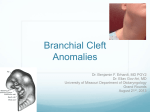Branchial Cleft Anomalies