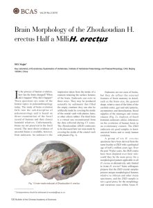Brain Morphology of the Zhoukoudian H. erectus Half a Million
