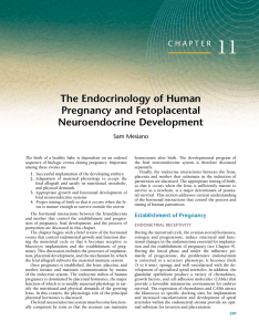 11 The Endocrinology of Human Pregnancy and Fetoplacental Neuroendocrine Development