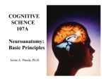 Neuroanatomy - UCSD Cognitive Science