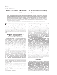Review Chronic Intestinal Inflammation and Intestinal Disease in Dogs