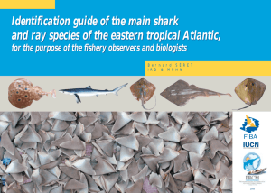 Identification guide of the main shark and ray species of the eastern