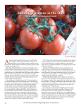 A Boosting Lycopene in the Diet The tomato consumption study by Susan McGinley