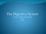 The Digestive System - Downey Unified School District