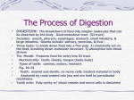 The Process of Digestion - Fox Valley Lutheran High School