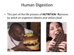Unit 21.1 Human Digestion PowerPoint