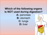 Quiz The digestive system