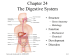 Chapter 24: Nutrition, Metabolism, and