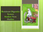 Ruminant Digestion Note Guide