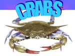 Crabs - OoCities