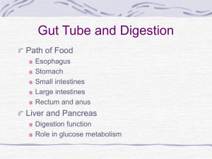 Gut Tube and Digestion