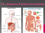 1.4 Human Organs & Systems digest & endocrine