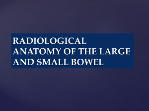 1-RADIOLOGICAL ANATOMY OF THE LARGE BOWEL 2nd year GI