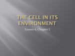 The Cell in its Environment - Mother Teresa Regional School