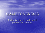 Gametogenesis - NCEA Level 2 Biology