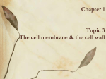 Chapter 1 The cell membrane & the cell wall