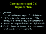 Chromosomes and Cell Reproduction