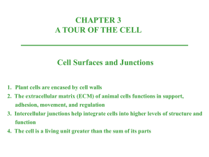 cell wall - Johnston Community College