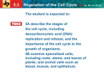 5.3 Regulation of the Cell Cycle TEKS 5A, 5B, 5C, 5D, 9C Cancer cells