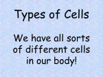 Types of Cells We have all sorts of different cells in our body!