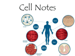 02 Cell Notes