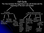 Cell Cycle The time between the beginning of one cell division and