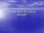 WHEN/WHY DO CELLS DIVIDE?