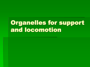 Organelles for support and locomotion