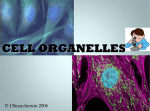 Cells PPt 2